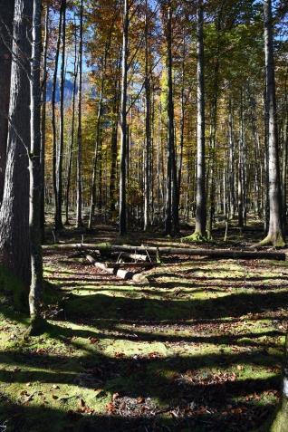 Kinigssee_Wald01