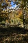 Kinigssee_Wald03