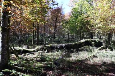 Kinigssee_Wald05