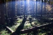 Kinigssee_Wald06