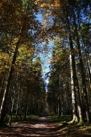 Kinigssee_Wald08