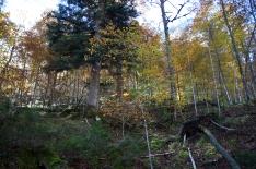 Kinigssee_Wald11